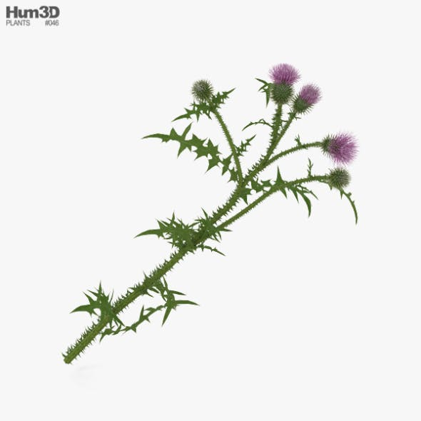 Thistle - 3DOcean Item for Sale