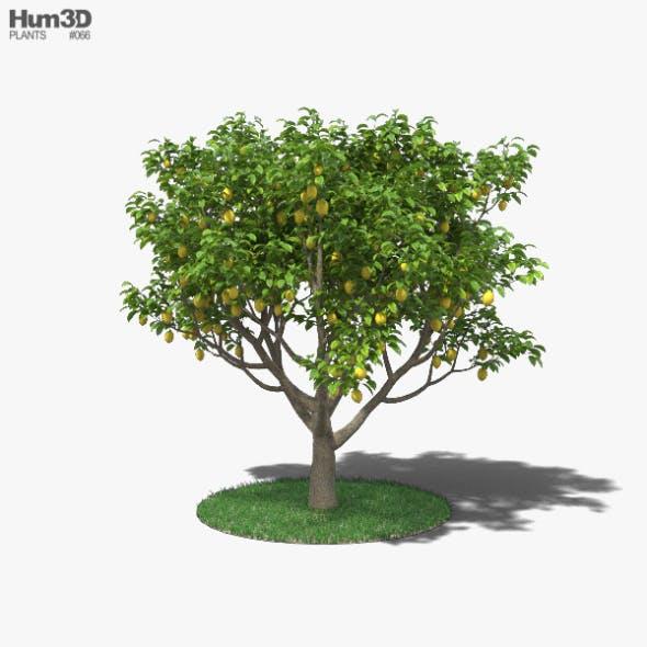 Lemon Tree - 3DOcean Item for Sale