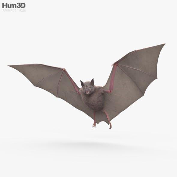 Common Bat HD - 3DOcean Item for Sale