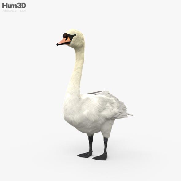 Mute Swan HD