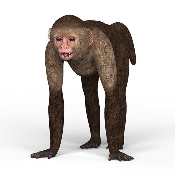 Capuchin Monkey - 3DOcean Item for Sale