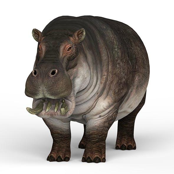 Hippopotamus - 3DOcean Item for Sale
