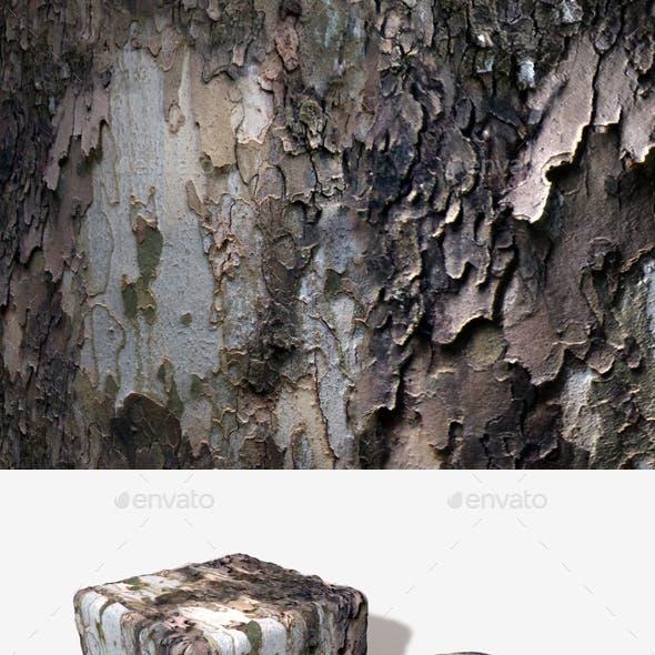 Peeling Tree Bark Seamless Texture