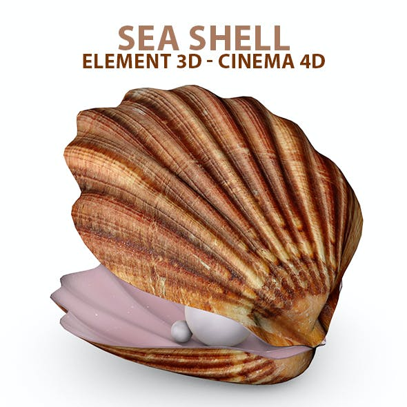 Sea Shell for Element 3D & Cinema 4D