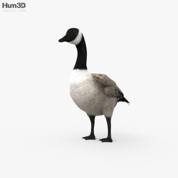 Canada Goose HD