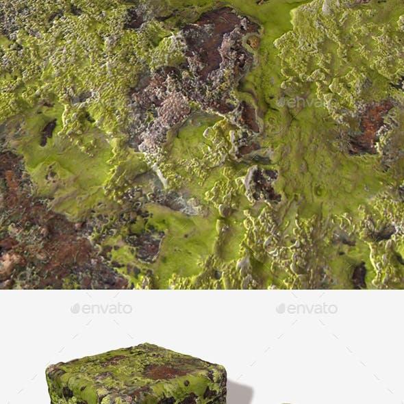 Rock Moss Seamless Texture