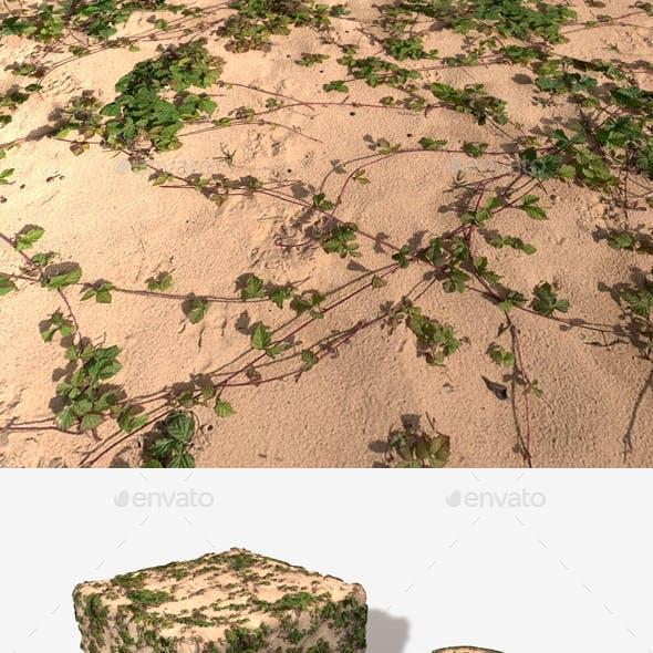 Vines on Sand Seamless Texture