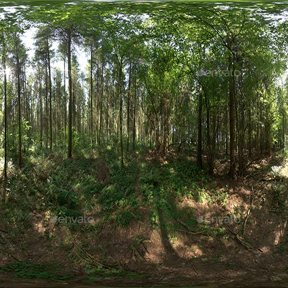Jungle HDRI - 3DOcean Item for Sale