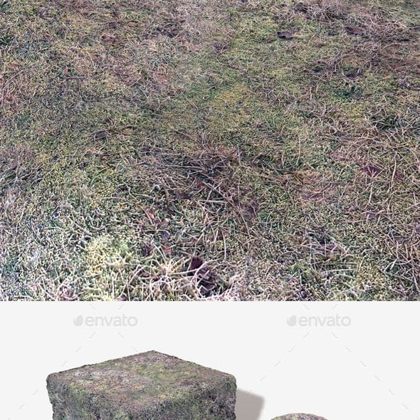 Frosted Moss Seamless Texture