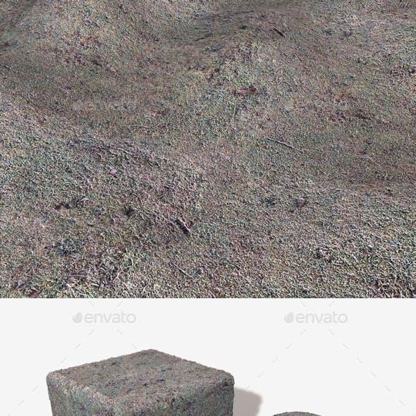 Frosty Moss Seamless Texture