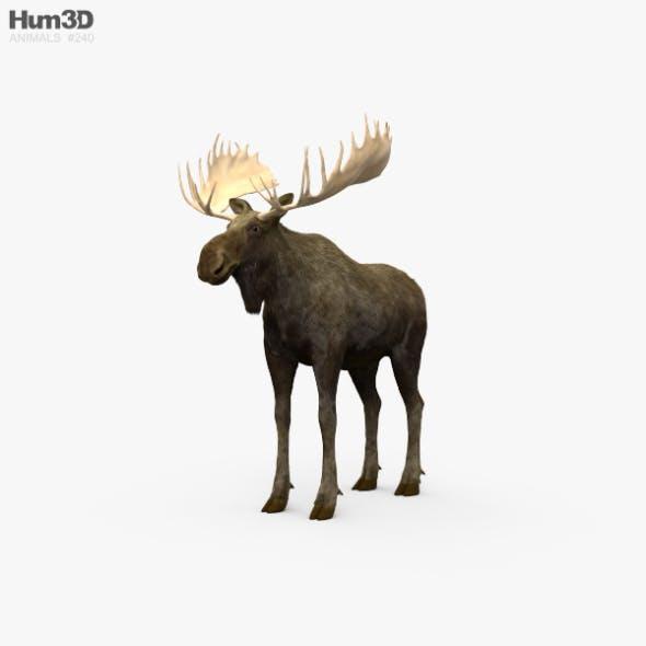 Moose HD - 3DOcean Item for Sale