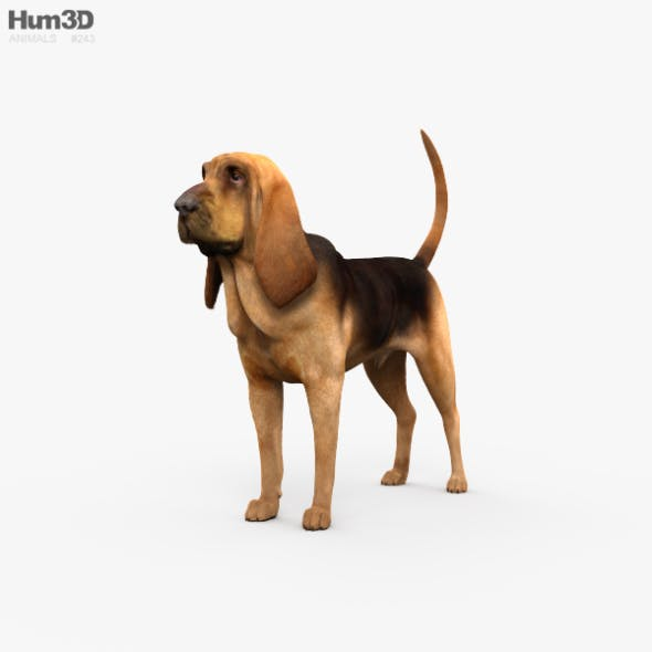 Bloodhound HD