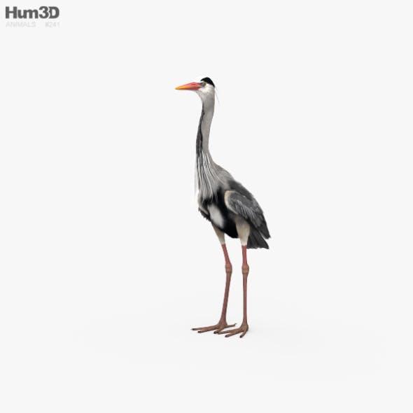 Heron HD