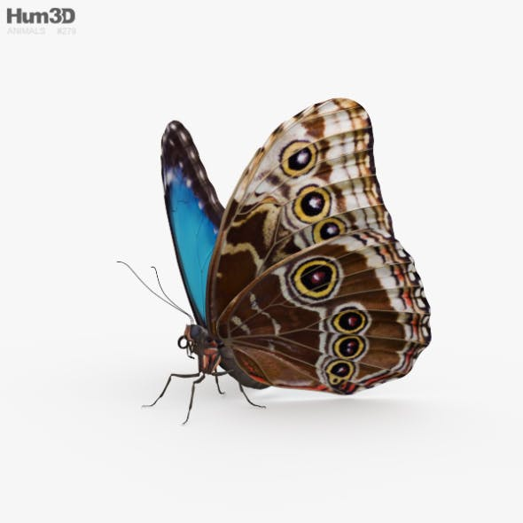 Morpho Butterfly HD