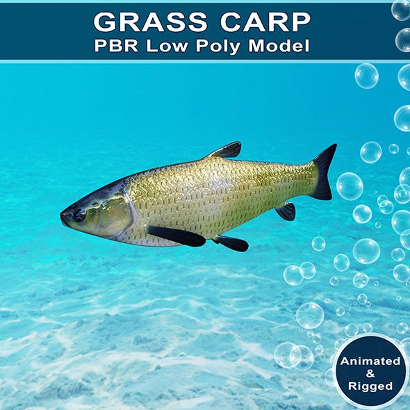 Grass Carp Animated Model