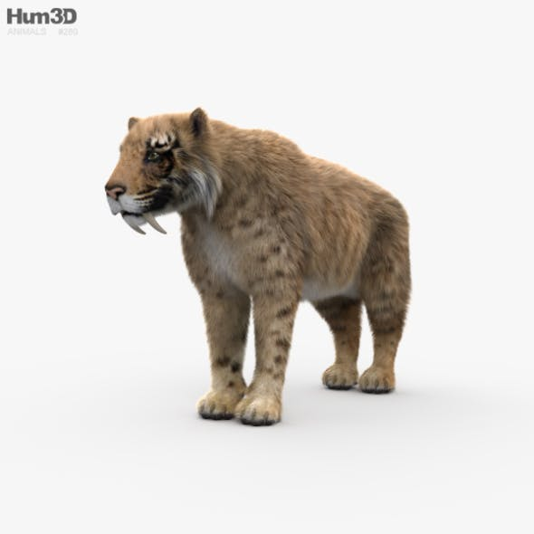 Saber-Toothed Tiger HD