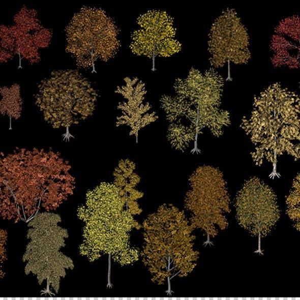 Twenty different trees