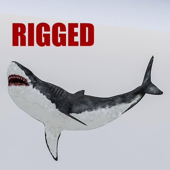 3D Rigged Shark Model