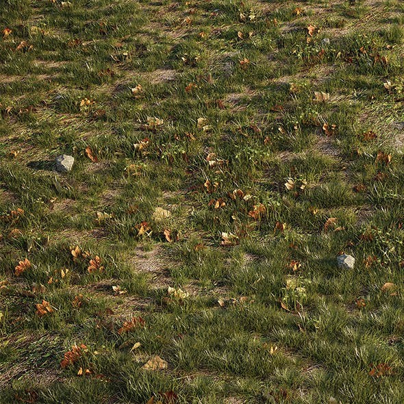 House Grass or Lawns - 3DOcean Item for Sale