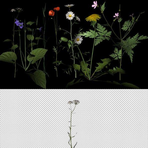 Twenty different types of flowers