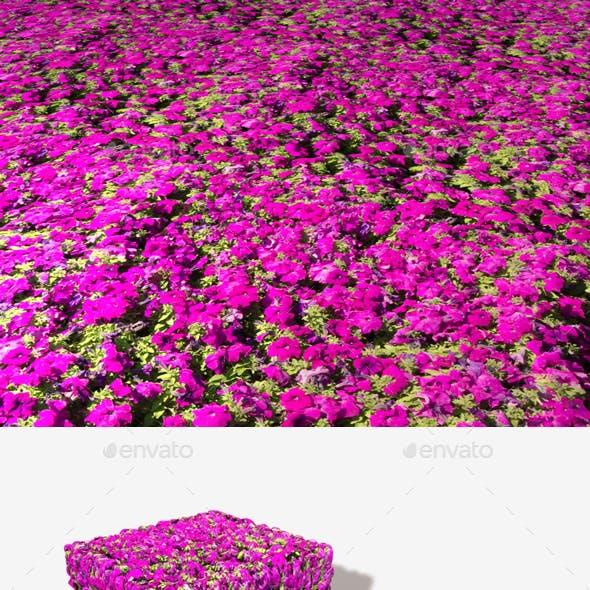 Magenta Flowers Seamless Texture