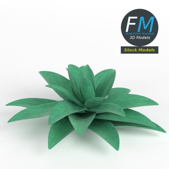 Stylized succulent plant