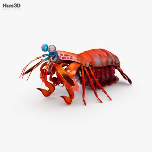 Mantis Shrimp HD