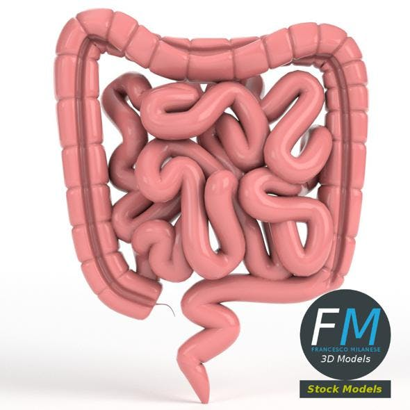 Anatomy - Human intestine