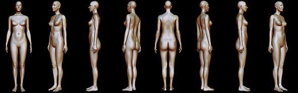 Woman body anatomy - 3DOcean Item for Sale