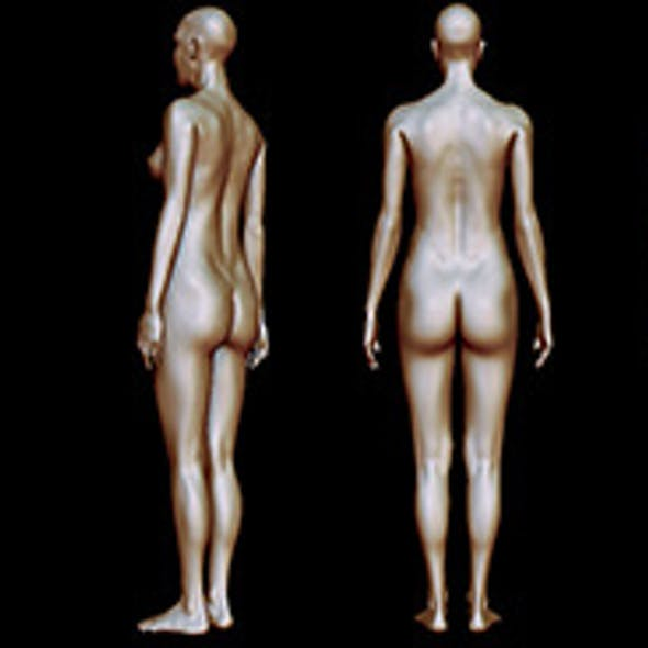 Woman body anatomy