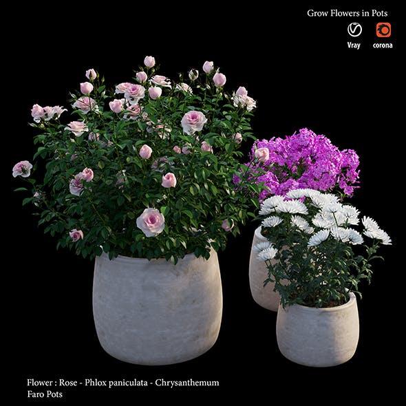 Flower in pot - 3DOcean Item for Sale