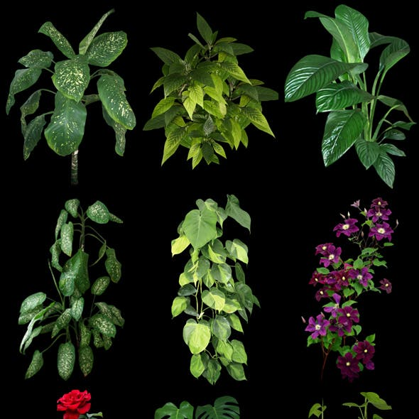 Plants for 3D scenes