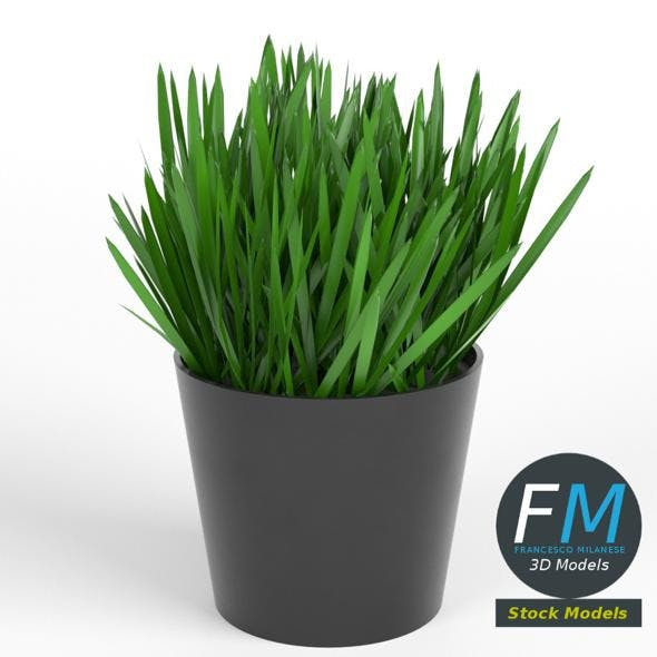 Grass in a pot 1 - 3DOcean Item for Sale