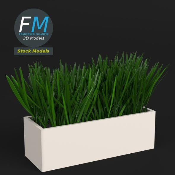 Grass in a pot 2 - 3DOcean Item for Sale