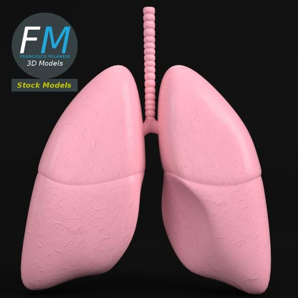 Anatomy - Human lungs