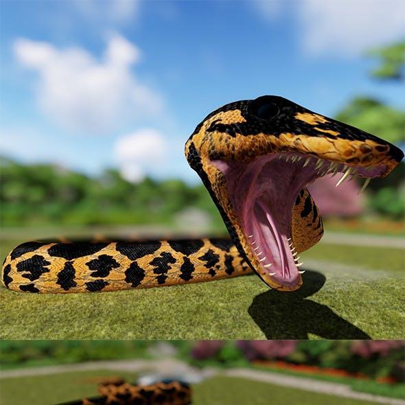 Boa constrictor Reptilia 3d Model