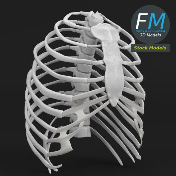 Anatomy human rib cage - 3DOcean Item for Sale
