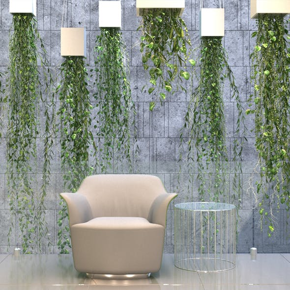 Hanging Plants 1