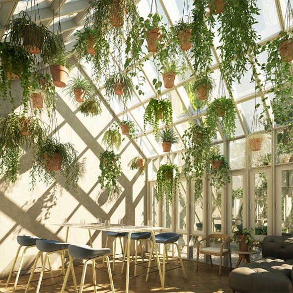 Hanging Plants 2