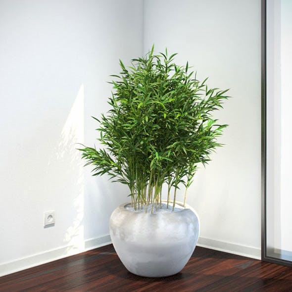 Bambus Muriel - 3DOcean Item for Sale