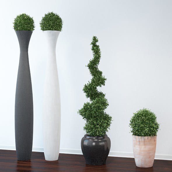 Boxwood Trees - 3DOcean Item for Sale