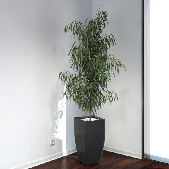 Oleander - 3DOcean Item for Sale
