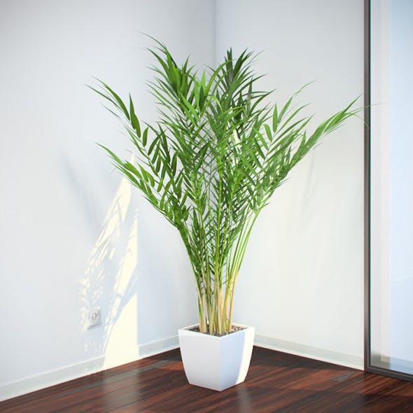 Areca Palm - 3DOcean Item for Sale
