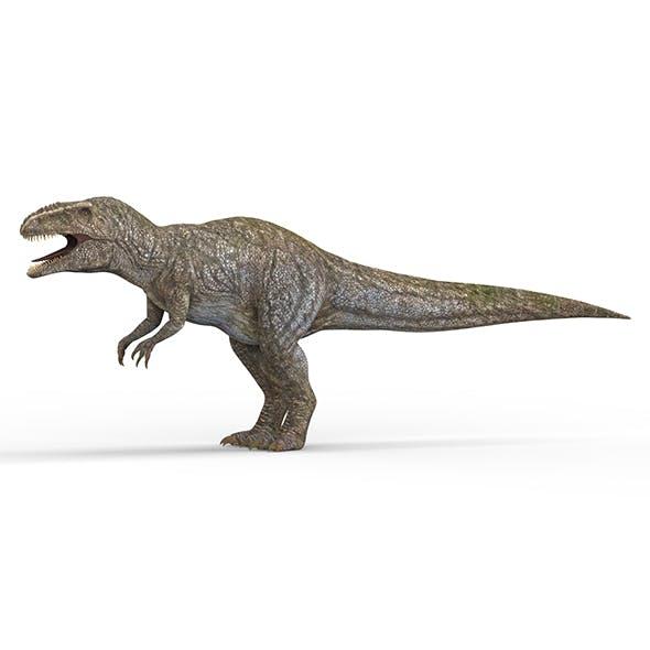 Giganotosaurus Dinosaur