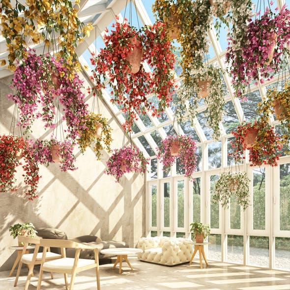 Hanging Plants 4