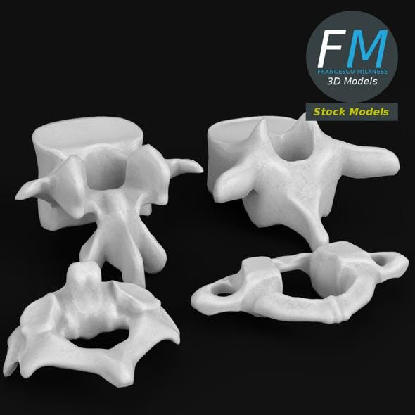 Anatomy - Human vertebrae set