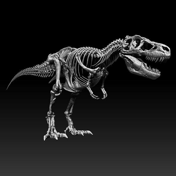 Sub Tyrannosaurus Rex Full Skeletons - SubREX - 3DOcean Item for Sale