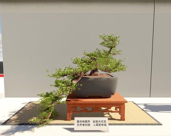 Bonsai Tatami Japan 4 - 3DOcean Item for Sale