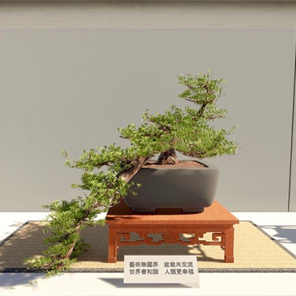 Bonsai Tatami Japan 4