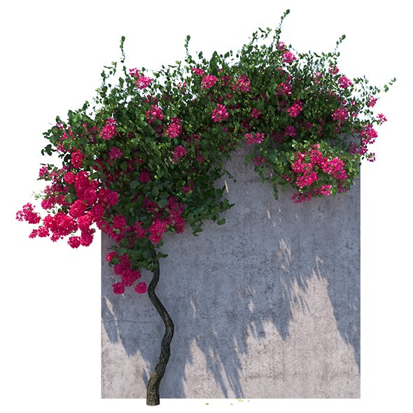 Bougainvillea Landscape Exterior - 3DOcean Item for Sale